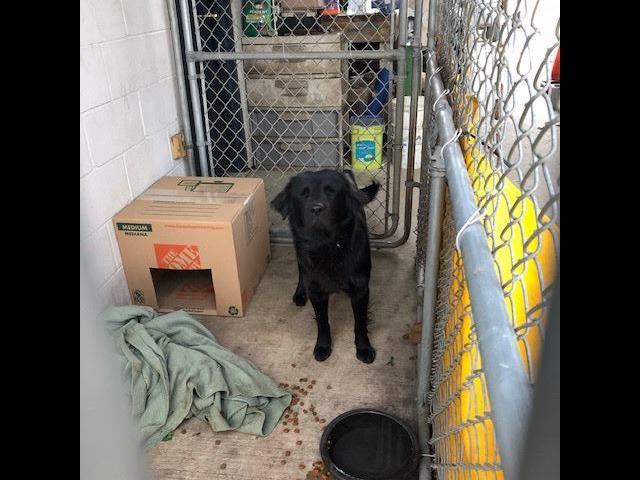 Lab Found on March 5, 2019 Sitting